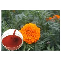 Buy cheap Tagetes Erecta Flower Natural Flower Extracts Powder Preventing Eye Health product