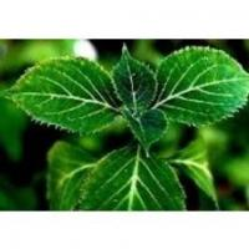 Buy cheap pharmaceutical grade 100% natural yohimbe 8% yohimbe bark extract , Corynante from wholesalers