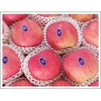 Buy cheap Fuji Apple (JNFT-026) product