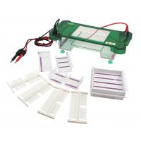 Buy cheap Stable Agarose Gel Electrophoresis Apparatus Auto Switch Off ISO Approved product