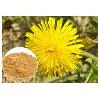 Buy cheap Anti Cancer Dandelion Root Powder Natural Extraction Improving Liver Function product