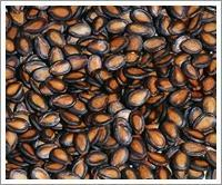 Buy cheap Black Watermelon Seeds (JNFT-060) product