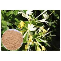 Buy cheap Anti Bacterial Natural Flower Extracts Chlorogenic Acid 5% Honeysuckle Flower Extract Powder product