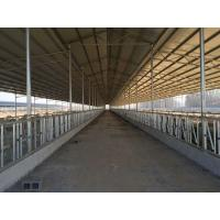 Good Price Poultry Farm Building Steel Structure Sheds for Caw /Chicken/ Goats