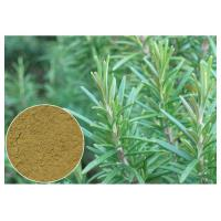 Buy cheap Ursolic Acid Rosemary Herbal Plant Extract Anti Oxidation For Cosmetic CAS 77 52 1 product