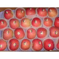 Buy cheap Fresh Apple from wholesalers