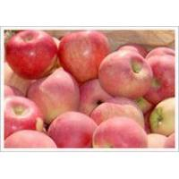 Buy cheap Red Star Apple (JNFT-031) product