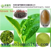 China Supplier Natural Green Tea Extract Polyphenols 20%,80%,98%/green tea extract export on sale