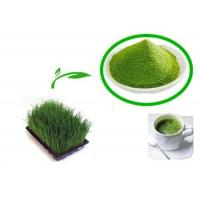 Quality High Quality Barley Grass Extract for anti-sunburn; anti-cancer Hordeum vulgare for sale