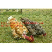 Buy cheap Chicken Wire Mesh, Farm Fence, Wire Fencing (DCLWJZ02) product