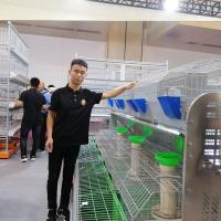 Buy cheap 2Tier 24 Cells Meat Rabbit Farming Cage/Industrial Rabbit Cage For Sale product