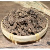 Natural Valerian Root from Valeriana officinalis L for  herb medicine xie cao gen for sale