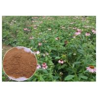 Buy cheap Chicory Acid Pure Herbal Supplements , Whole Herb Echinacea Purpurea Extract product