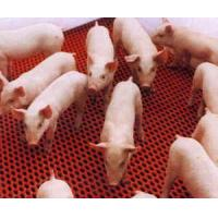 Buy cheap PVC Coated Calf/pig Cage floor (DCL-04) product