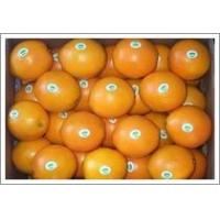 Buy cheap Navel Orange (JNFT-024) from wholesalers