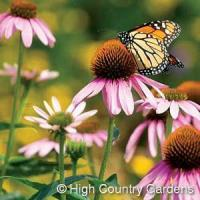 Buy cheap 1 OZ. Butterfly and Bird Wildflower Seed Mix product