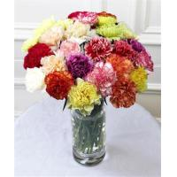 China Get Well Flowers 12 Fancy Carnations Mixed Guernsey Carnations 22.50 17.50 12 Fancy Carnations on sale