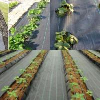 Buy cheap PP/PE woven weed control mats product